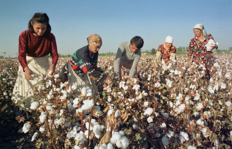 Suspend bank loans tainted by Uzbek forced labor