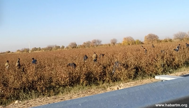 Soldiers finish cotton harvest in Turkmenistan