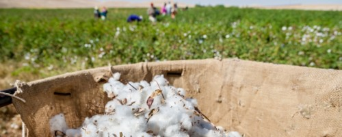 Brands should boycott Turkmenistan cotton over use of forced and child labour