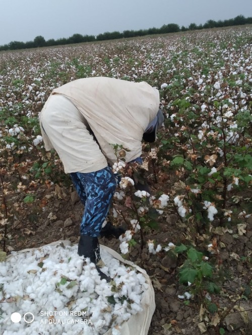Brands Need Assurances on Forced Labor and Civil Society in Uzbekistan