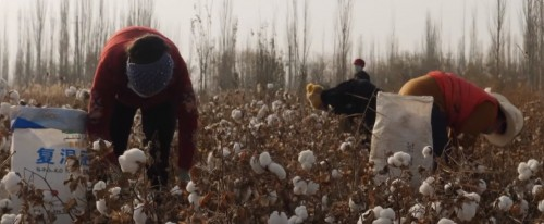 China's 'tainted' cotton