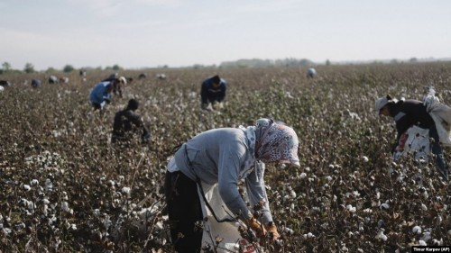 Uzbek State Workers Say They're Still Being Forced To Pick Cotton